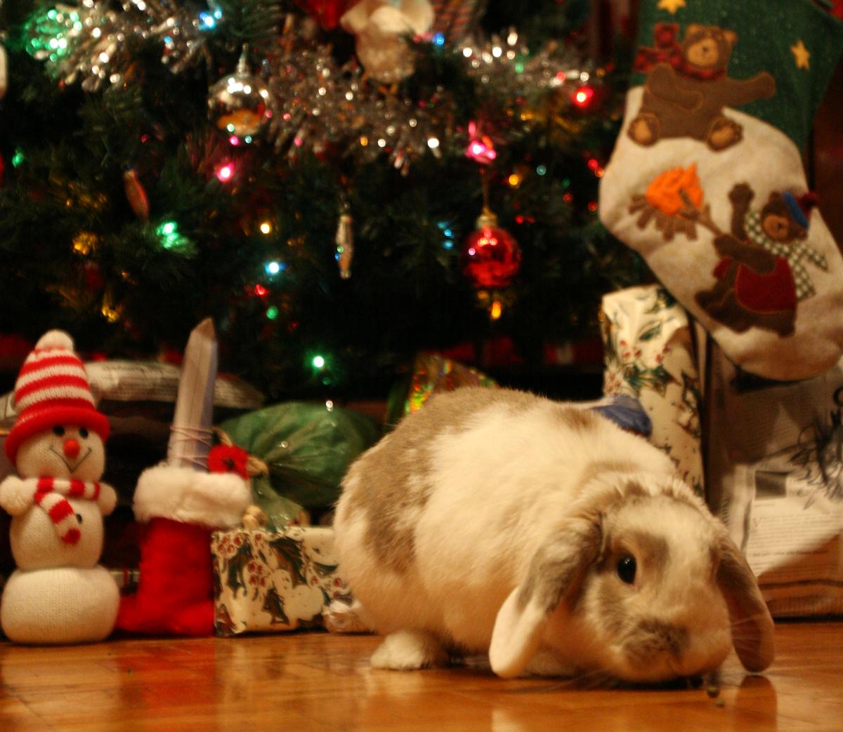 Bunny-Safe Tips for the Holiday Season